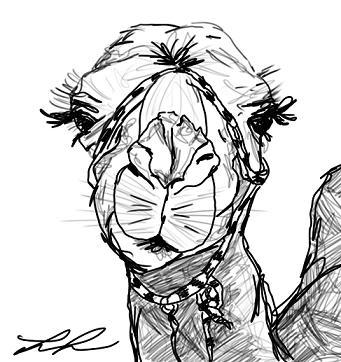 camel sketch | ATC