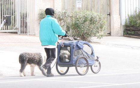 Dog Walker | ATC