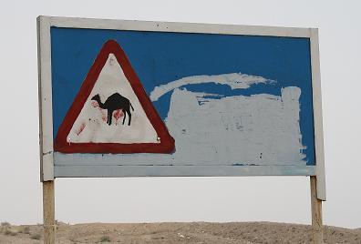 Camels | ATC