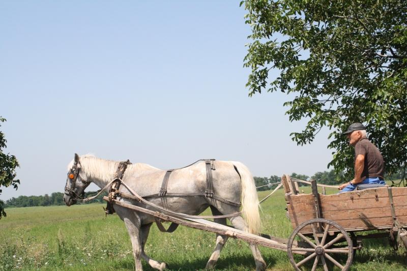 Horse Cart, Moldova