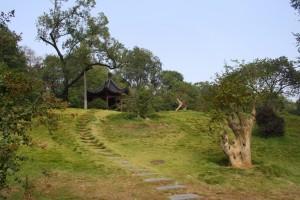 Yellow Crane Hill
