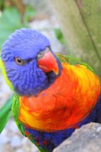 Evil parrot