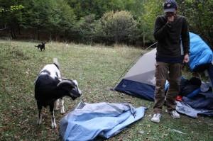 Camping Intruder