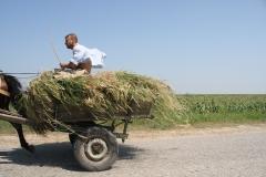 Horse-Cart, Moldova